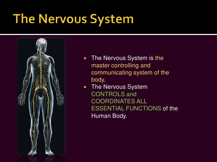 nervous system pdf free download